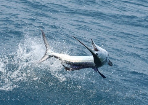 Billfish Charters Photo 2