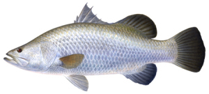 This is what we catch